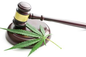 How to cope with dope: Marijuana & the Minnesota workplace